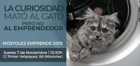 WEB Cabecera LA CURIOSIDAD MATÓ AL GATO